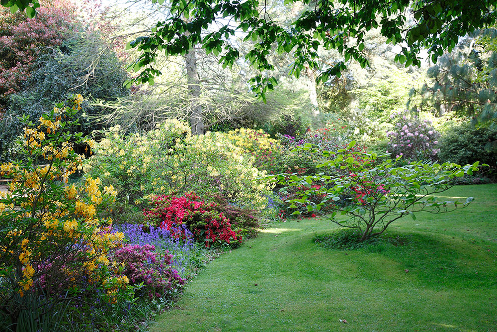 A riot of colourful azaleas, just beyond the pond.